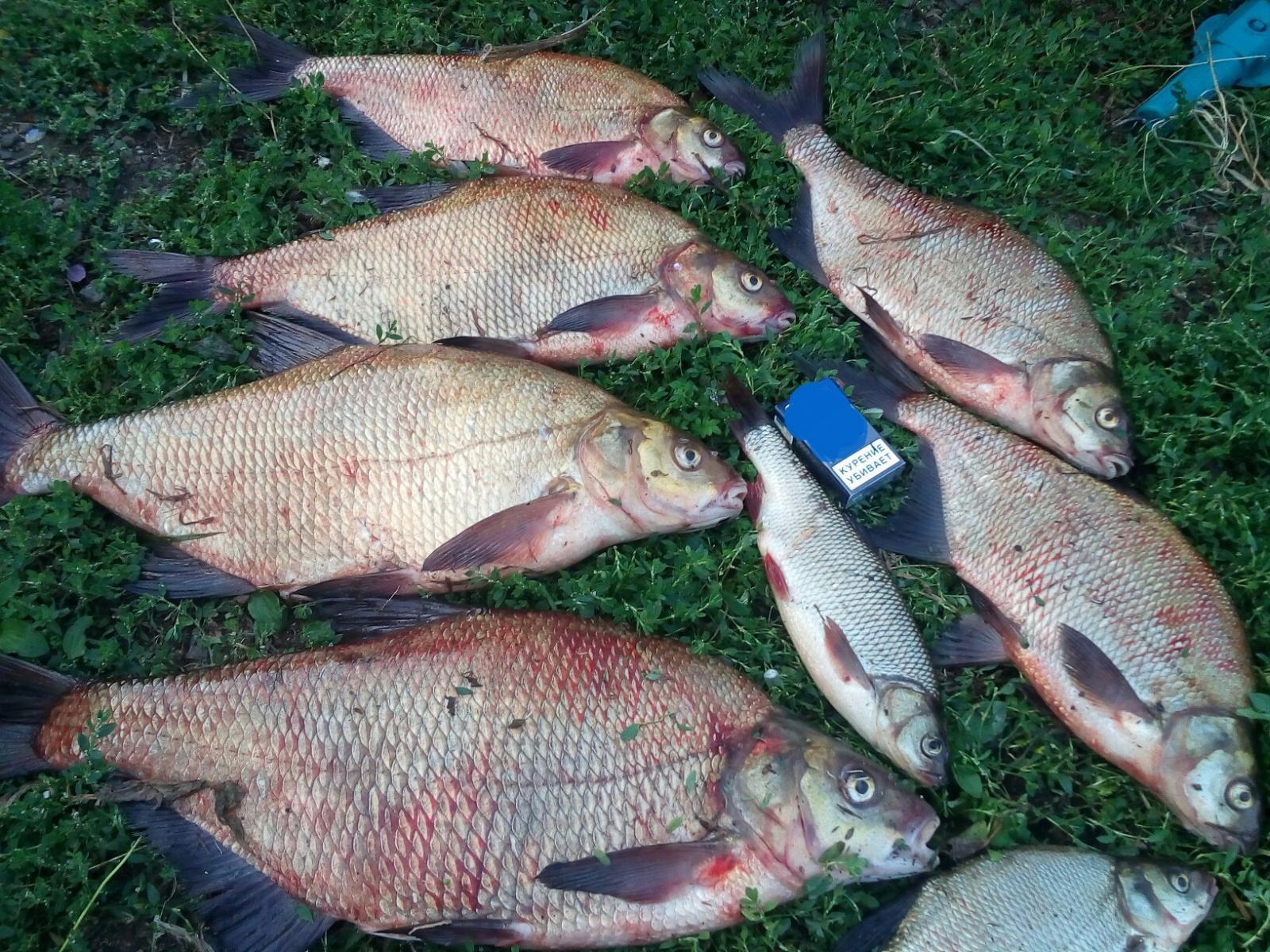 Прогноз клёва рыбы в Пензе, Пензенская область на неделю, рыболовный календарь