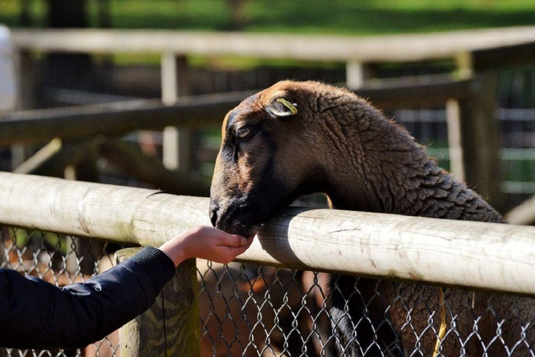 Картинки пензенского зоопарка