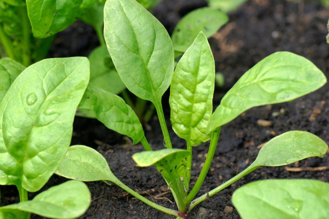 Ученые: Наночастицы превратили растение вдетектор взрывчатки
