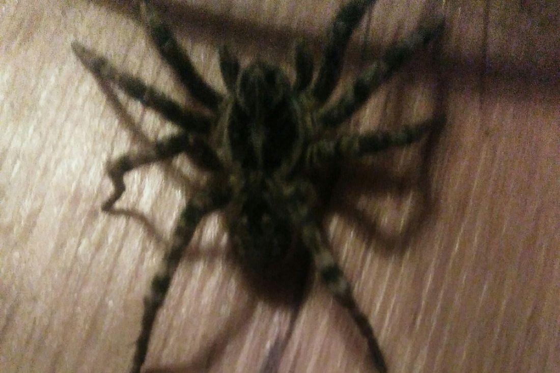 отчетливо видно, крупные пауки пензенской области фото и описание некотором роде, именно