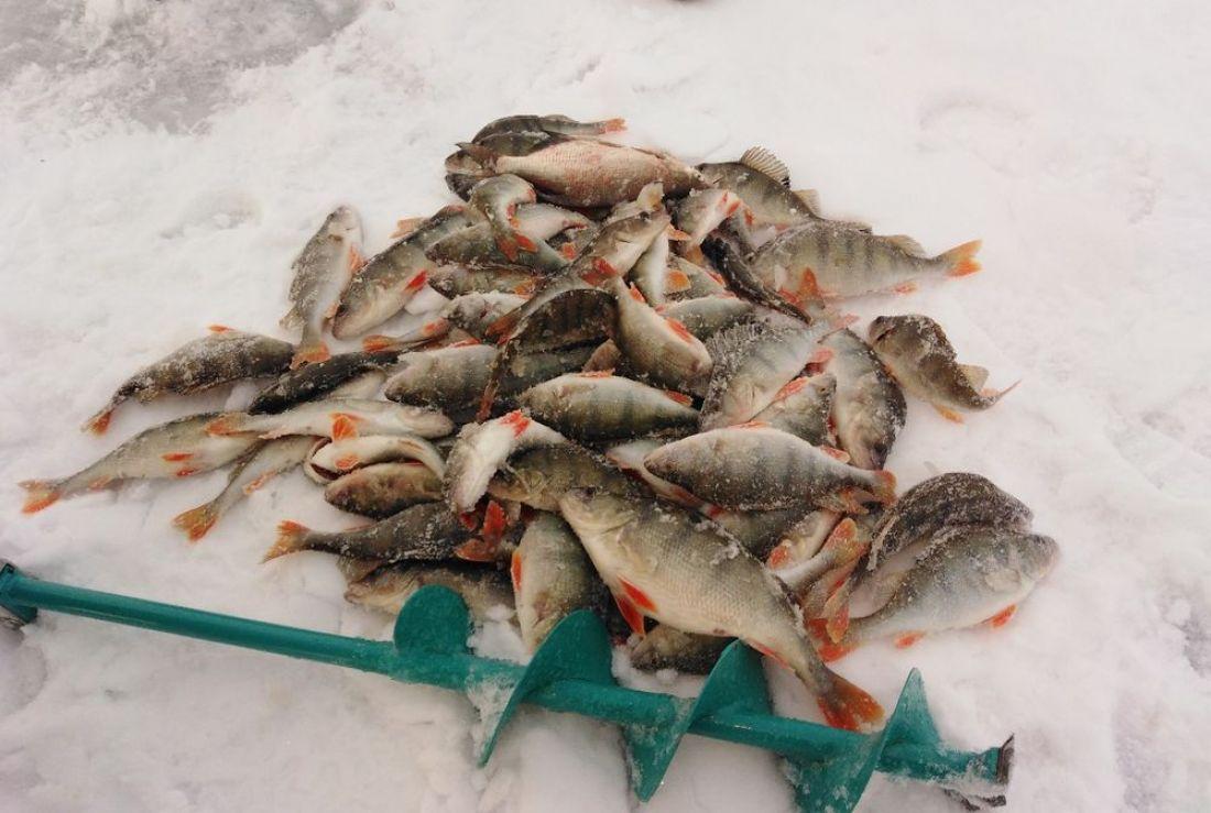 зимний улов рыбы в начале зимы фото семье очень чтили