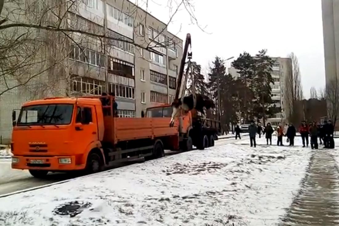 ВПензенской области началась операция повывозу изгорода лосей