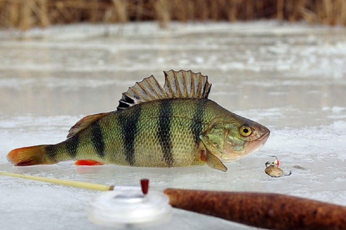Где клюет рыба в свердловской области зимой