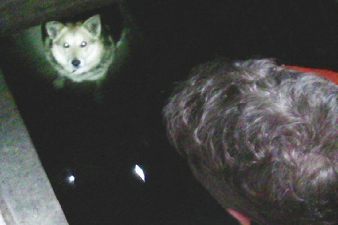 ВЗаре cотрудники экстренных служб вытянули собаку из4-метровой «ловушки»