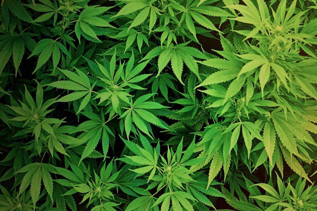 Гражданин Заречного сохранял дома марихуану ипатроны