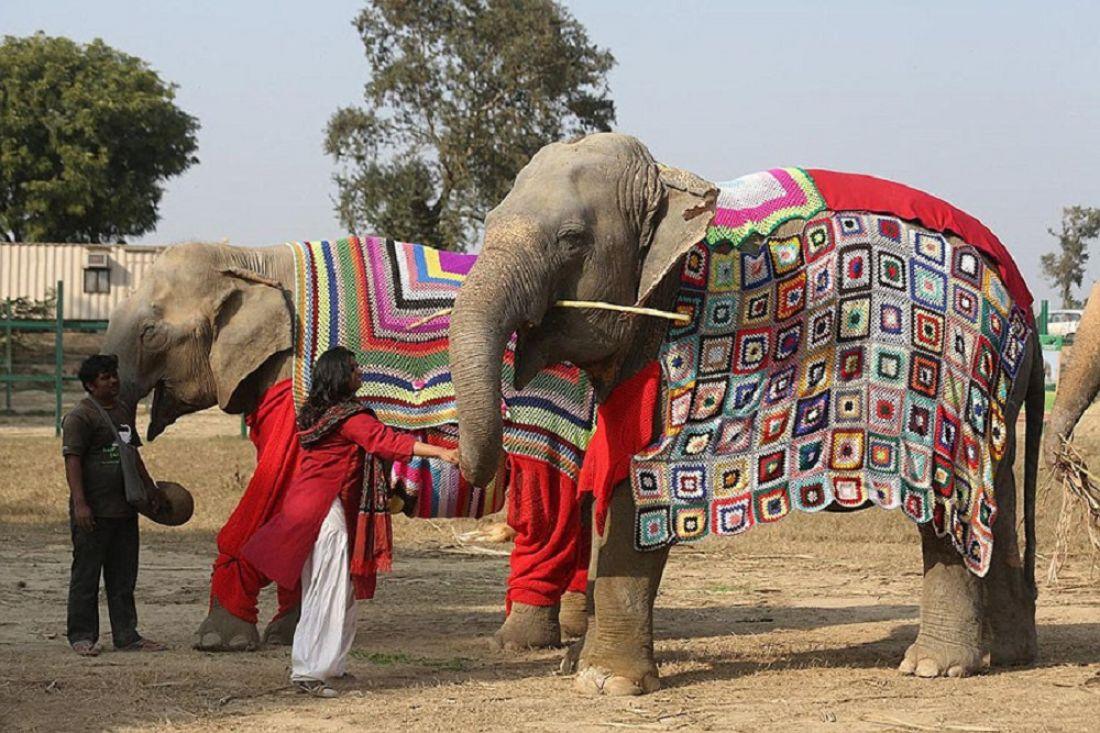 Индийским слонам связали пижамы