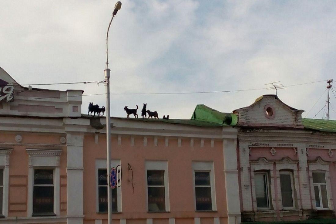 Коммунальщики немогут снять собак скрыши здания вцентре Пензы