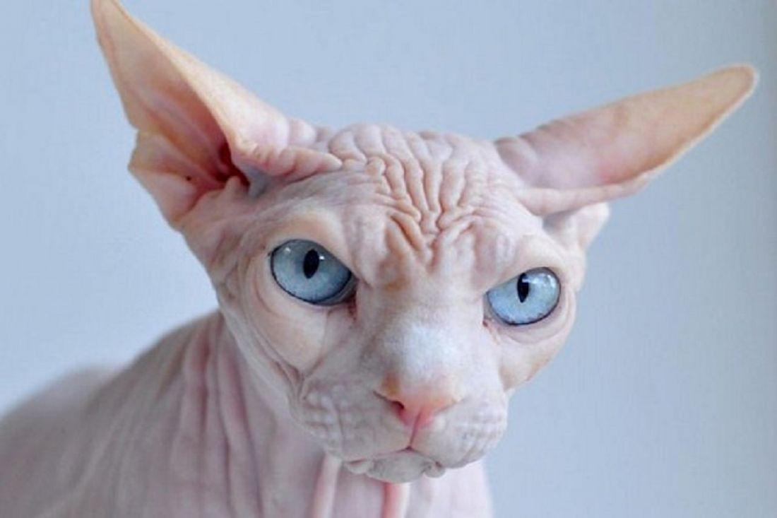 Прокуратуру призывают проверить ветврача изКраснодара, набивавшего татуировки кошкам