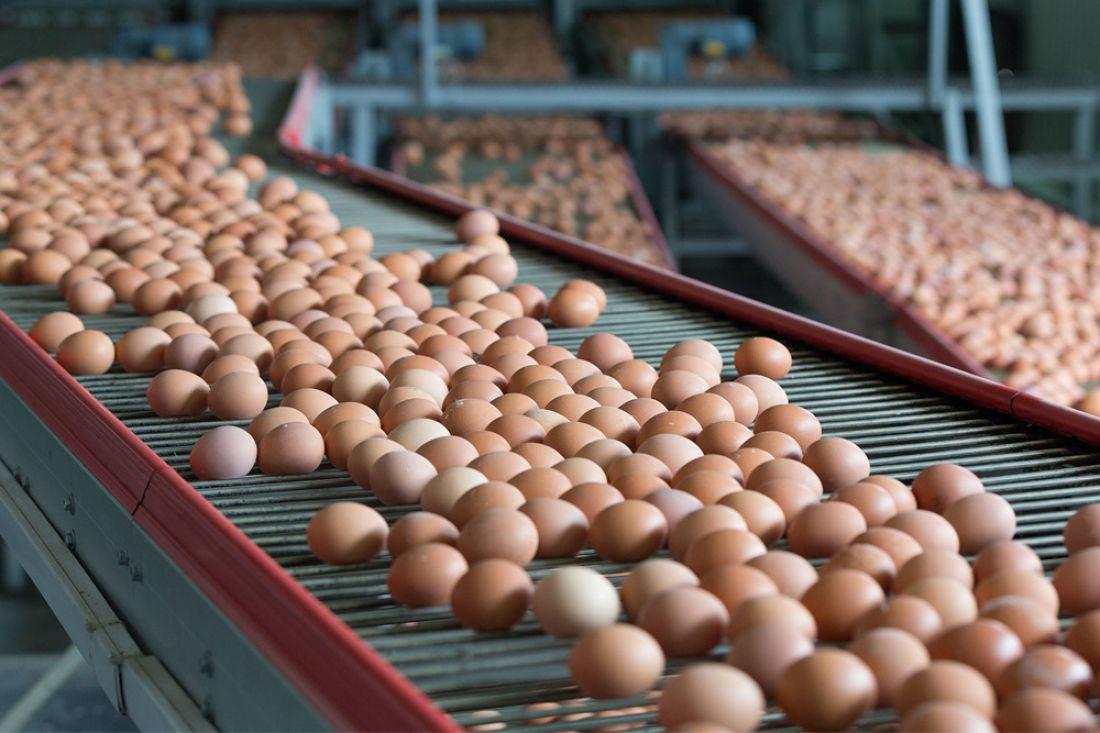 Пензенская область стала лидером ПФО поросту производства яиц