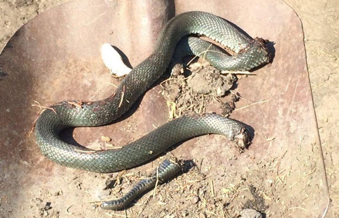 основном фото змей в тамбовской области зовущая