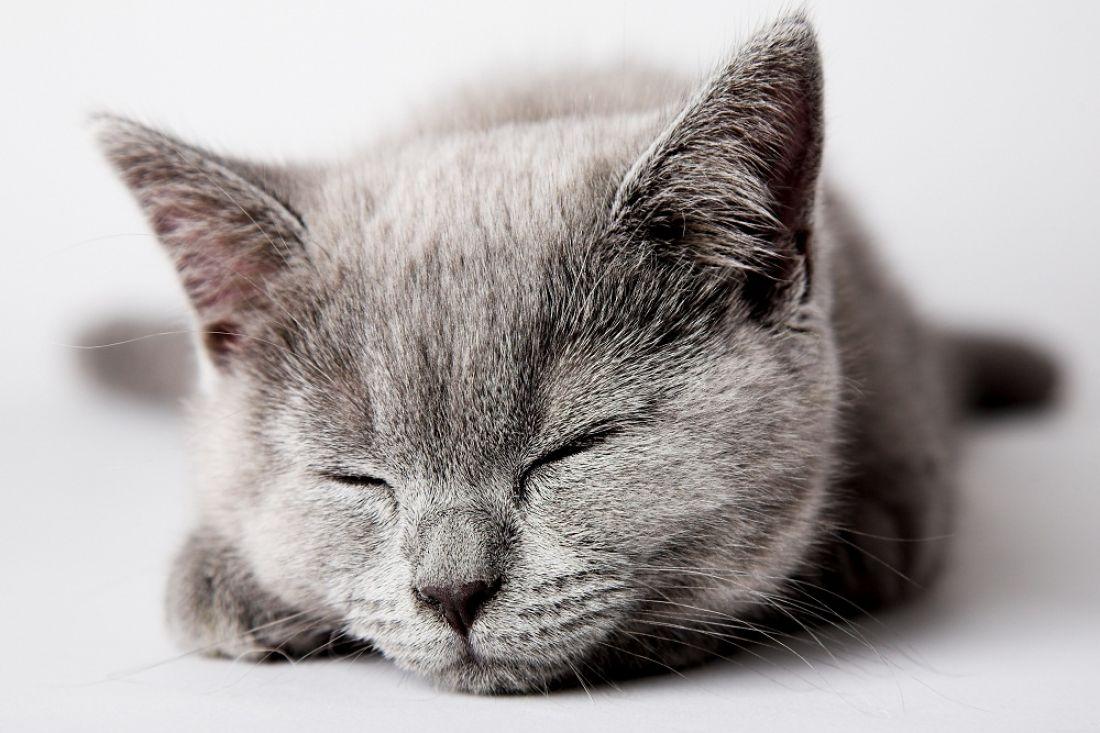 Изокна дома выбросили кота вцеллофановом пакете