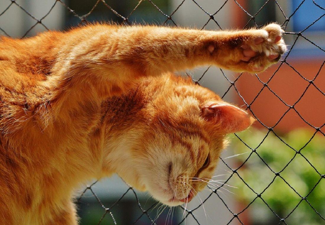 Ученые объяснили, почему опасно обниматься с котами
