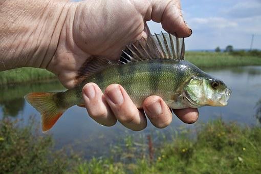 Каких размеров рыбу можно ловить в пензенской обл в2020 г