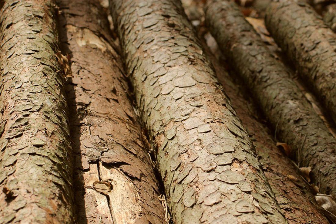 ВПензенской области выявлено два факта незаконной рубки деревьев