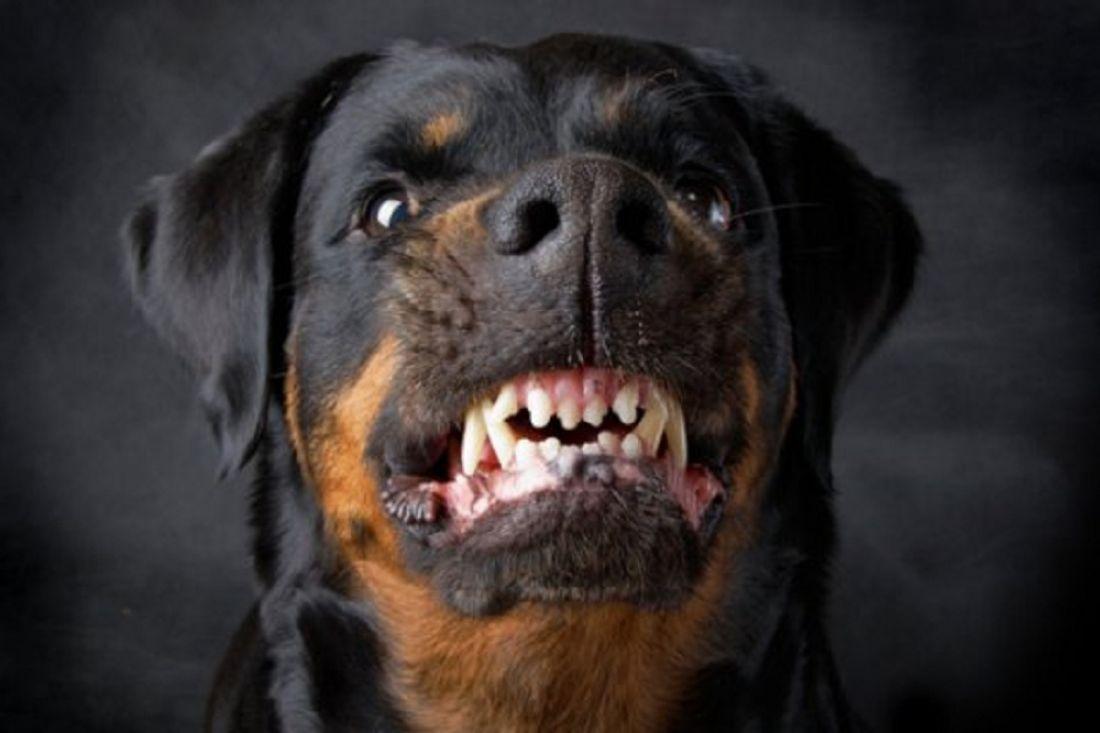 Собачка загрызла 3-х летнего ребенка вБурятии