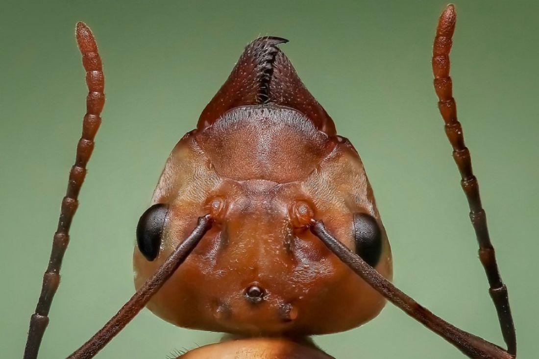Вмуравейниках найдены жуки-маньяки— Ученые