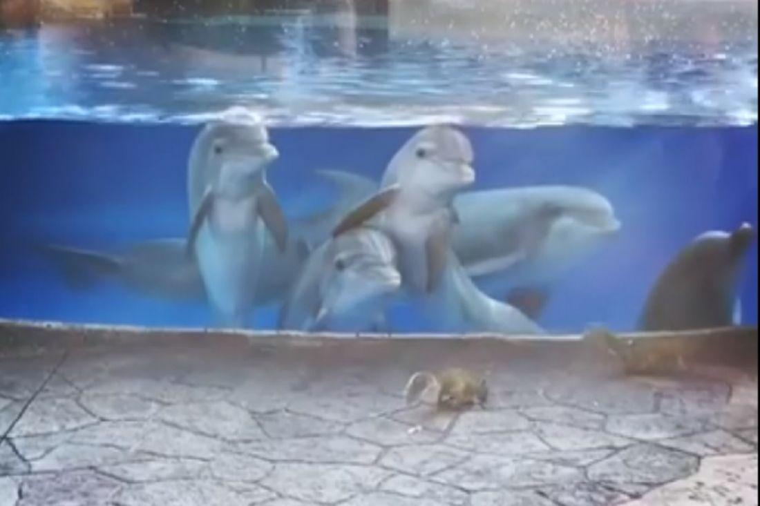 Дельфины засмотрелись набелочек вокеанариуме Флориды