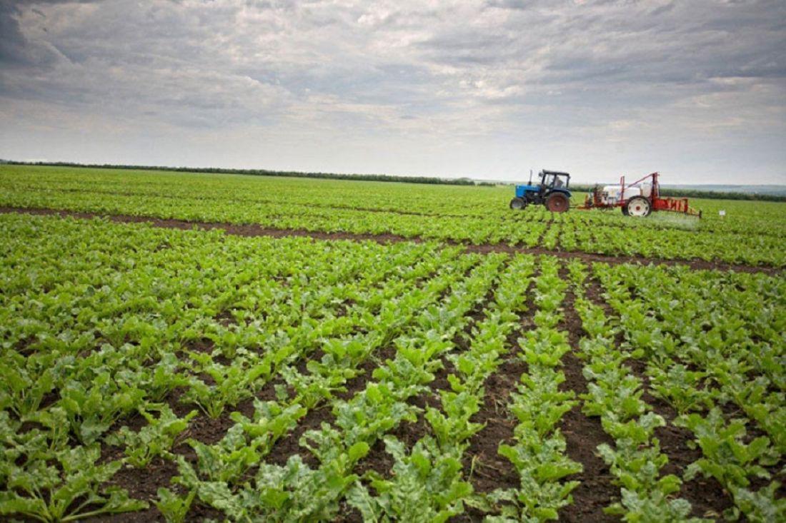 Курские аграрии собрали неменее 5-ти млн тонн сладкой свеклы