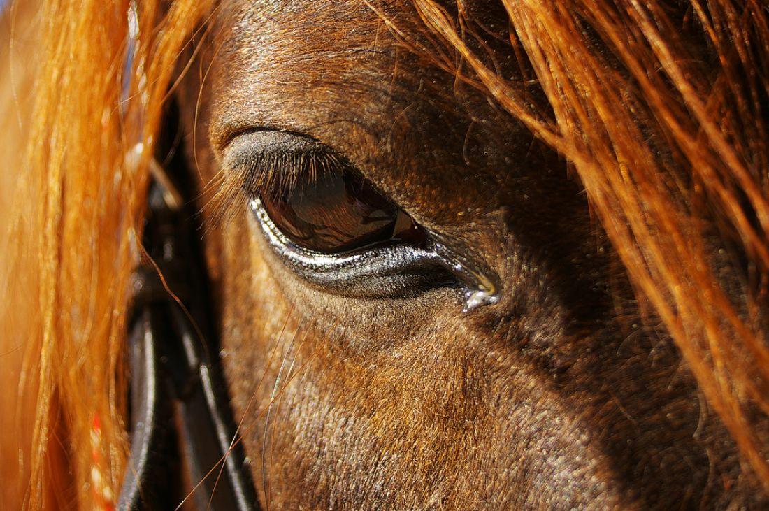 Лошадь откусила губу четырехлетнему ребенку вПриморье