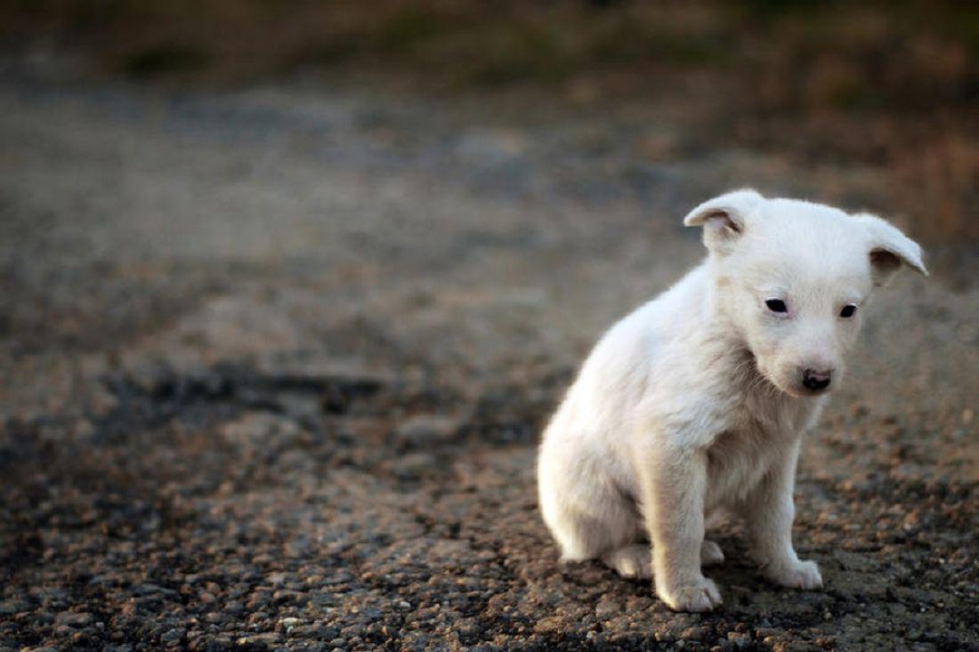 51-летняя жительница Волгограда, поедающая собак, непротив перейти налюдей