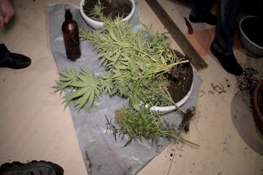 Ужителя Нижнеломовского района изъято неменее килограмма марихуаны