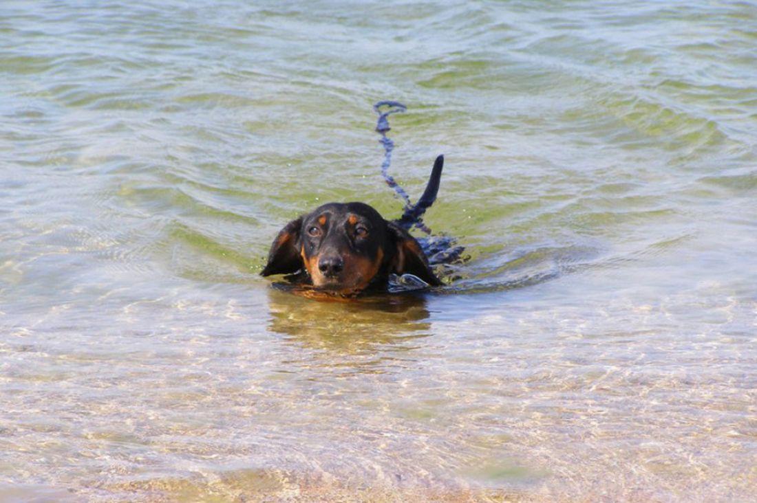 Наейском берегу потерялась собака намиллион