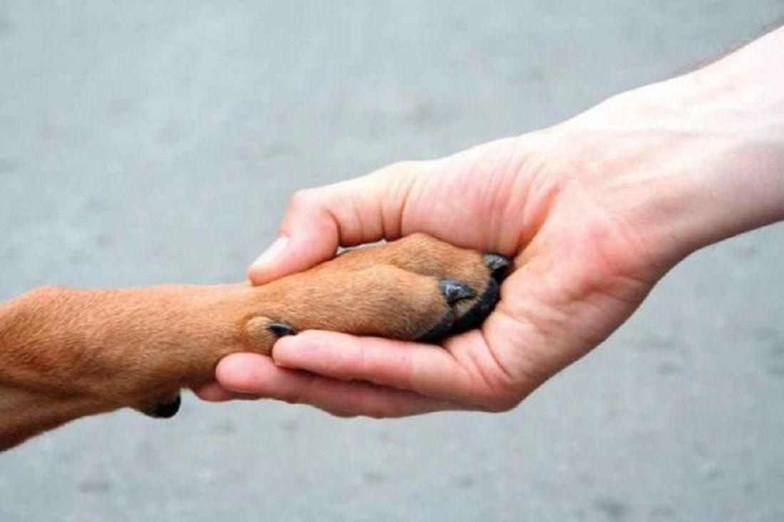 Ученые раскрыли секрет преданности четвероногих— Человек собаке друг