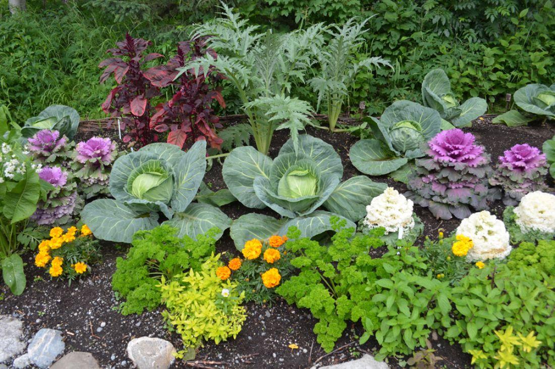 смешанные посадки овощей на грядке фото