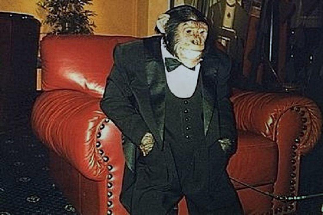 Пристрастившийся калкоголю икурению шимпанзе скончался отинсульта