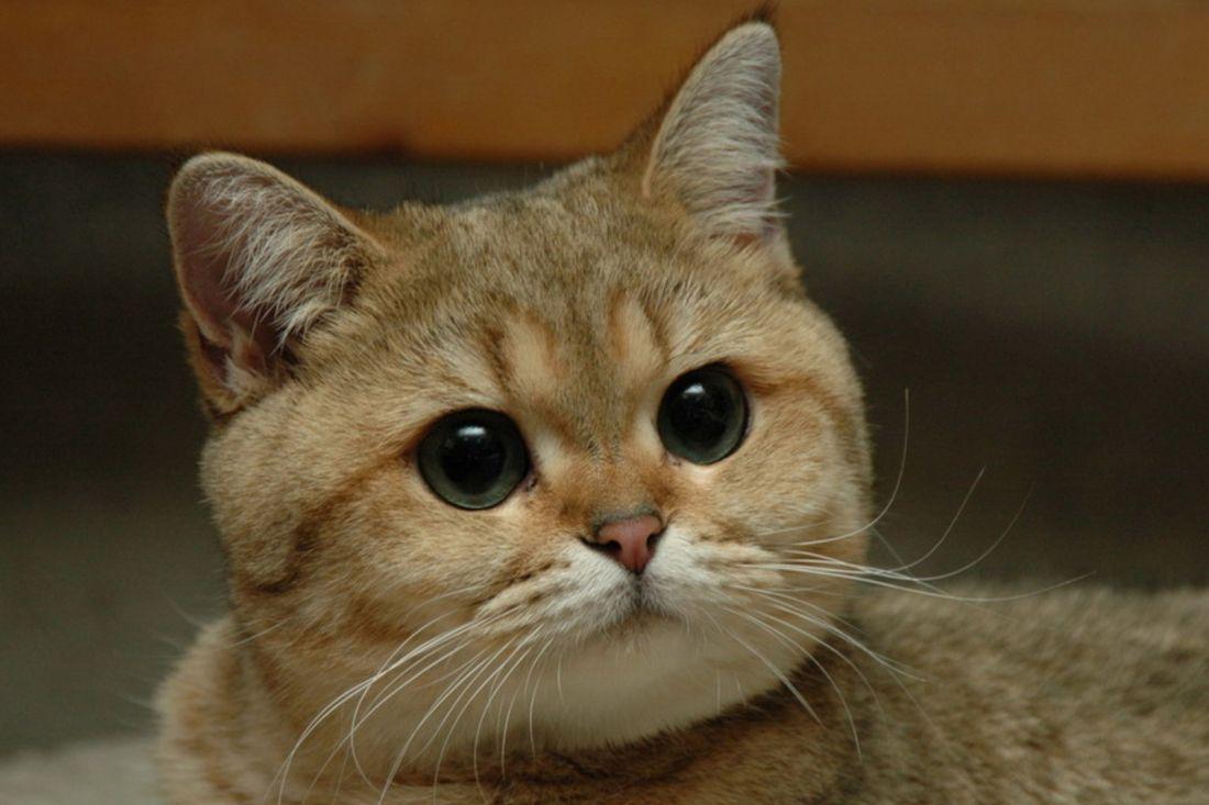 Гладить кошек опасно для жизни— Учёные предупреждают