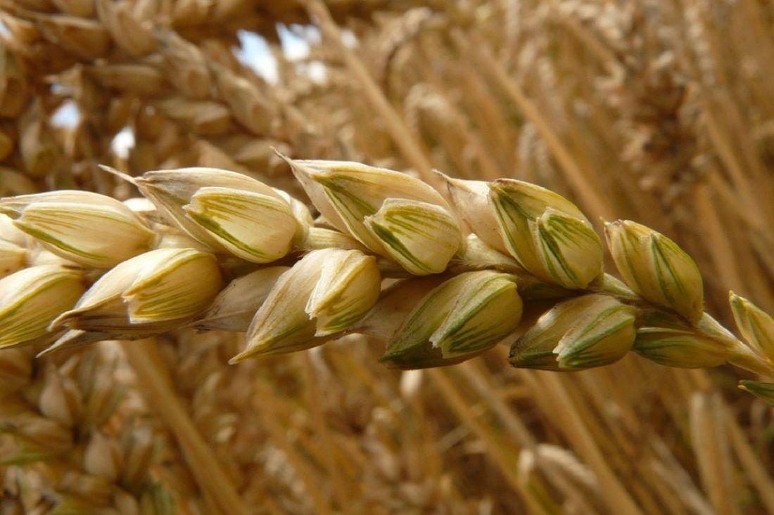 Пензенские аграрии собрали 1,7 млн тонн зерна