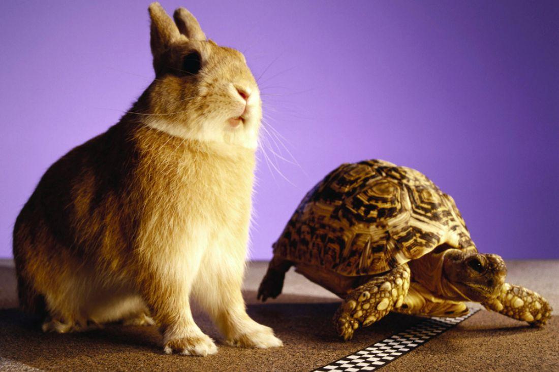 ВТаиланде устроили гонку между кроликом ичерепахой. Эзоп был прав