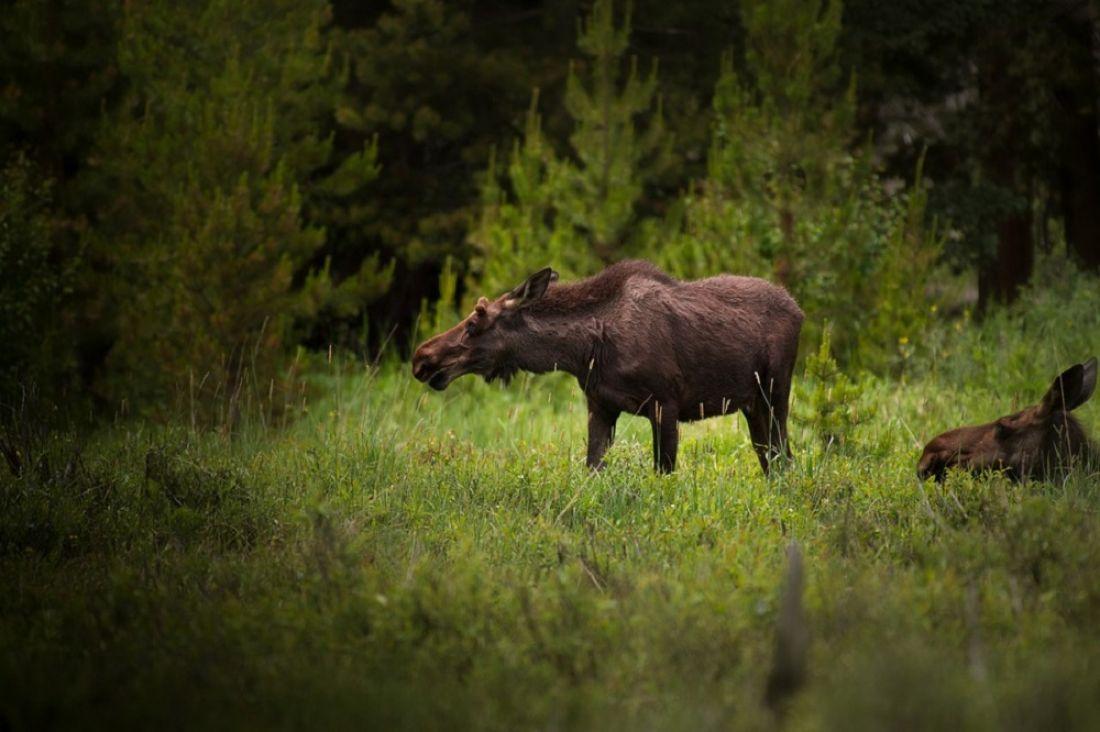 ВПензенской области ночью сбили 2-х лосей