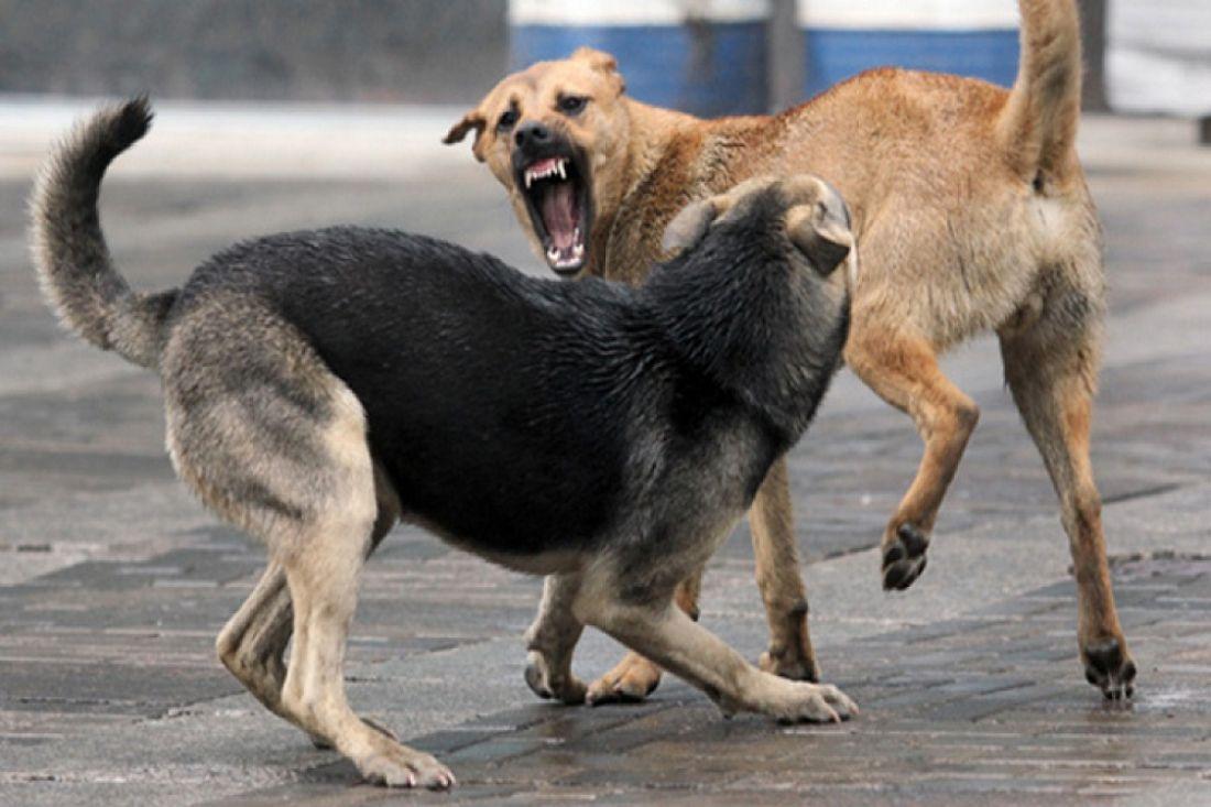 ВУфе дети опасаются ходить вшколу из-за враждебных бродячих собак