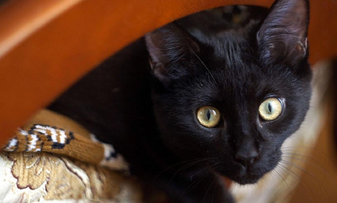ВРостове живодер брызнул перцовым баллончиком вморду коту
