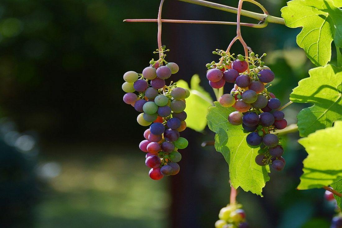 Ученые отыскали вкрасном вине вещество, замедляющее старение мозга