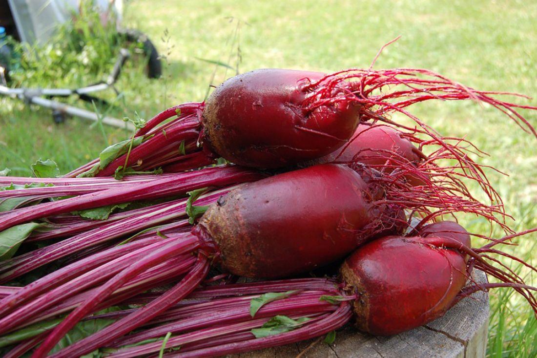 Урожай сладкой свеклы вБашкирии превысил 1,142 млн тонн