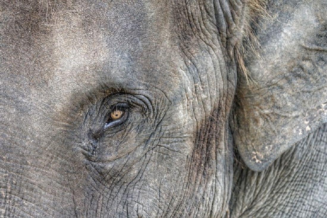 ВТаиланде слон убил германского туриста, также пострадал житель россии