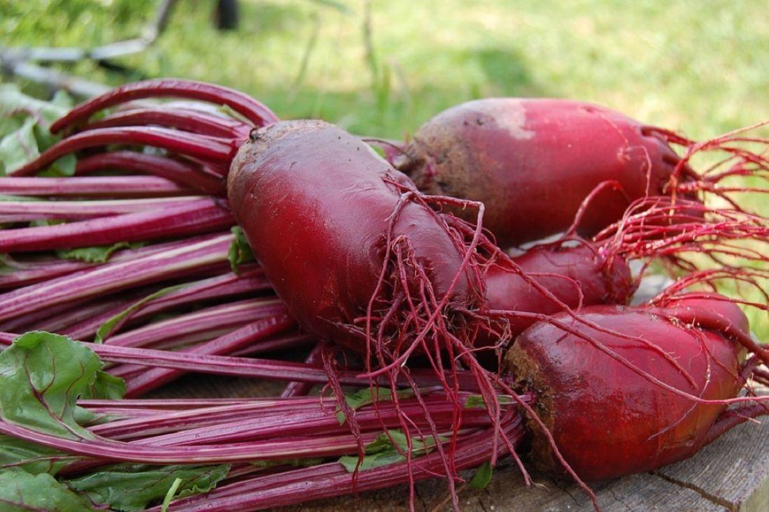 Агротехника выращивания свёклы. Посадка свёклы семенами 35