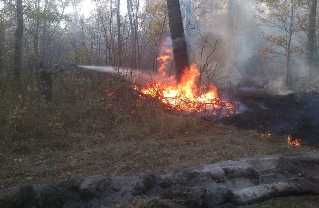 ВПензенской области устранили 4 лесных пожара