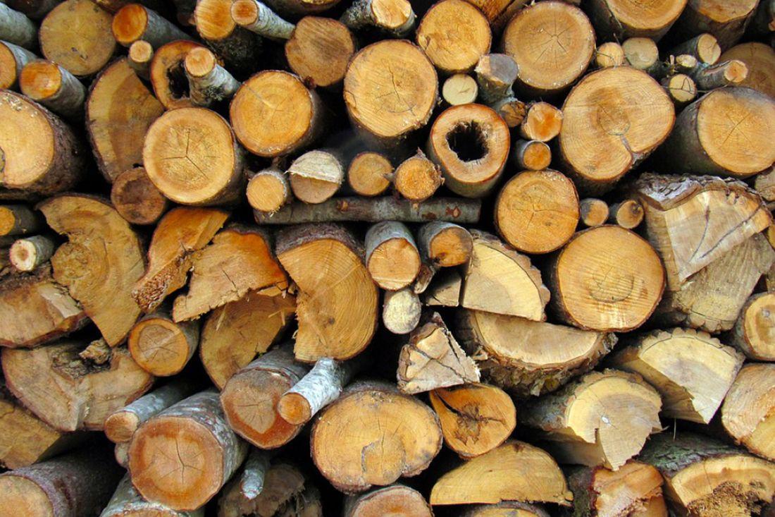 Шемышейский предприниматель осужден замассовую вырубку сосен