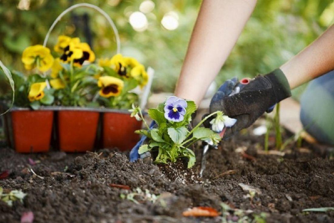 Как в огороде посадить цветы