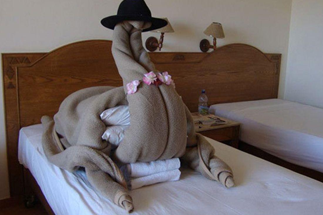 Смешные картинки для гостинице, открытки днем рождения