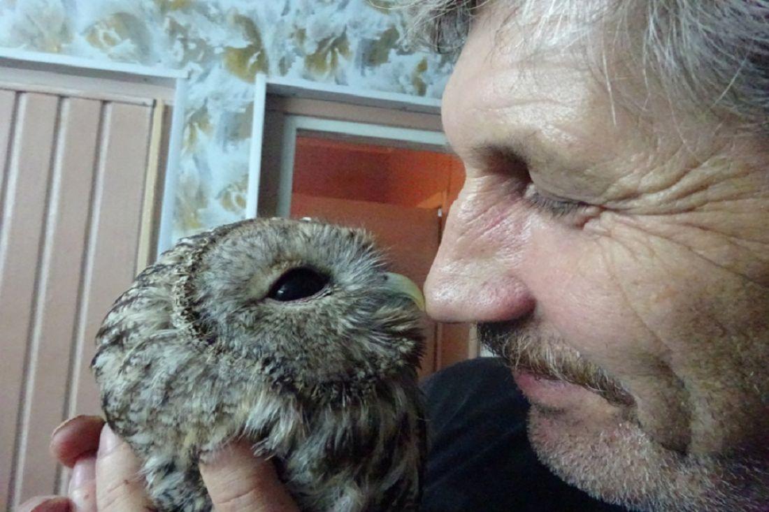 Пензенцы спасли совенка иотдали его взоопарк