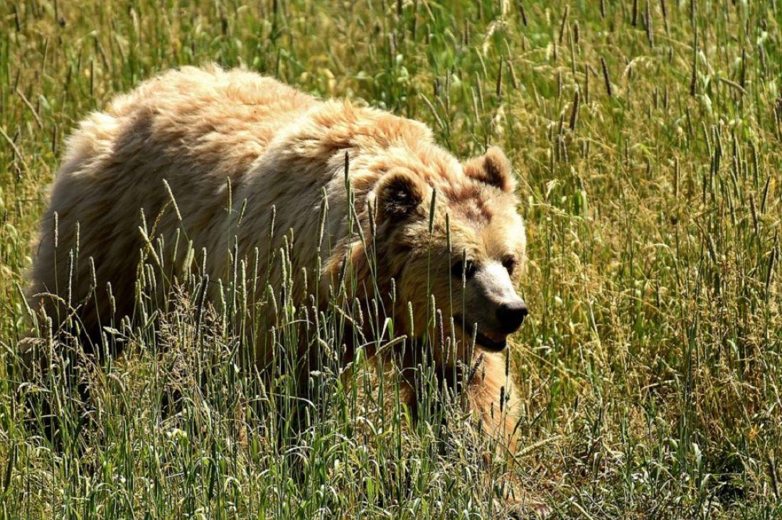 Уроженец Пензы умер в итоге нападения медведя нагеологоразведочную группу втайге