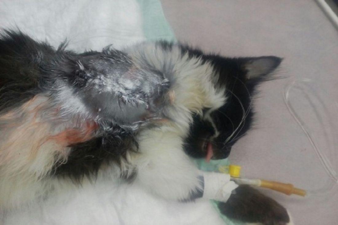 этот картинки избитых кошек сегодняшней