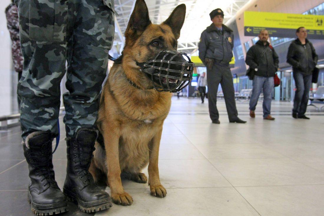 Вмагазине «Магнит» наулице Терновского обнаружили бесхозную сумку