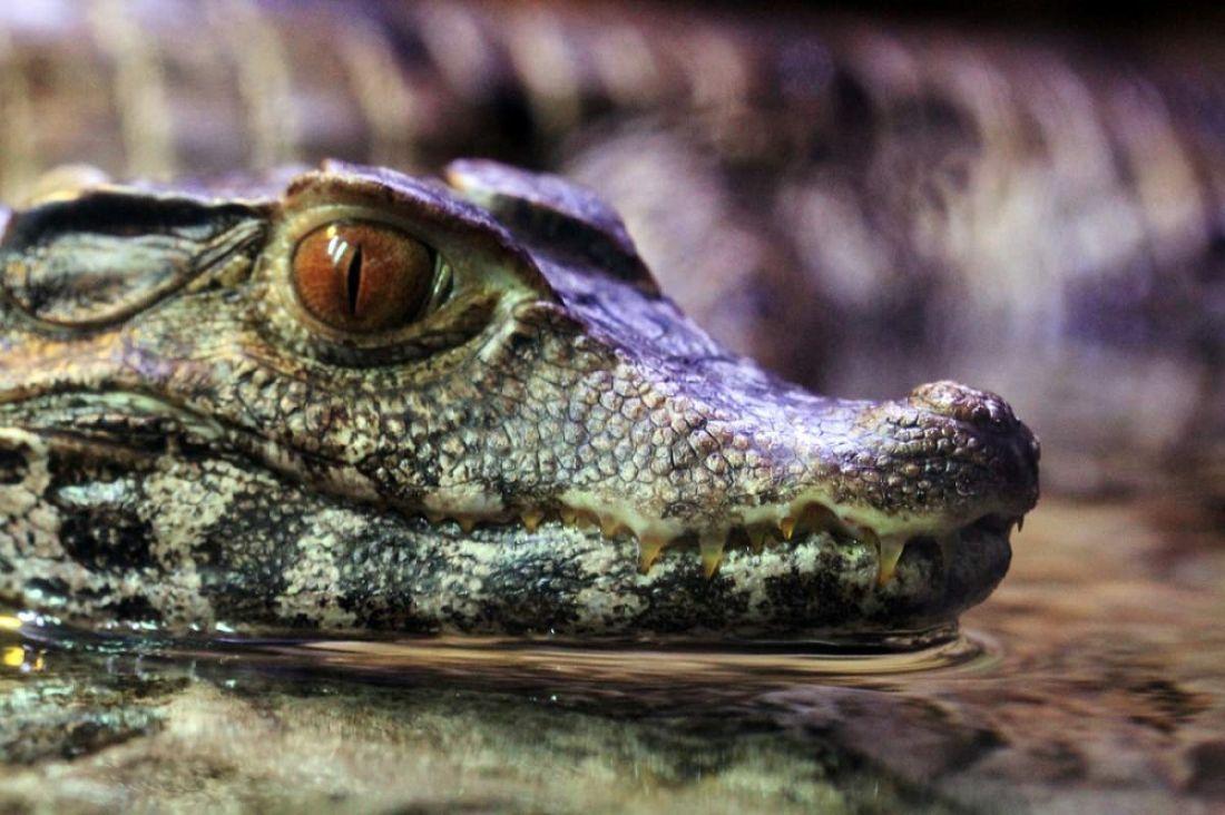 Небольшой крокодил замерз насмерть насвалке вПензе